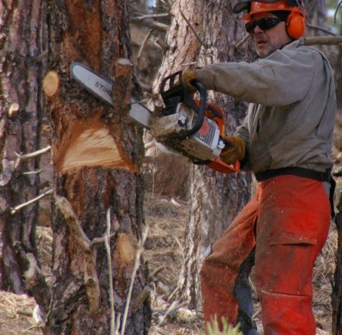 fully qualified tree surgeon dunvant swansea