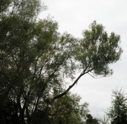 tree surgery service swansea