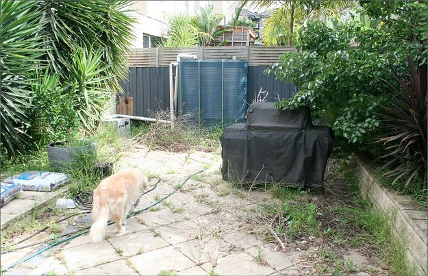 garden-clearance-and-pressure-washing-cleaning-sketty-swansea-before
