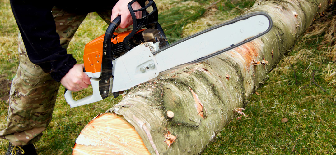 Tree Surgery removal pruning swansea
