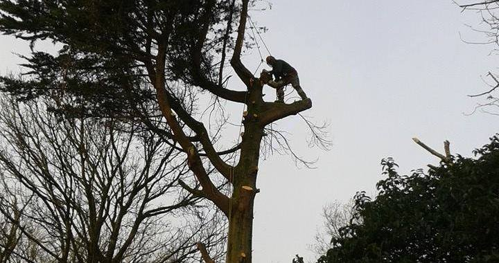 Tree surgery Swansea