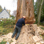 swansea dunvant killay tree surgeon