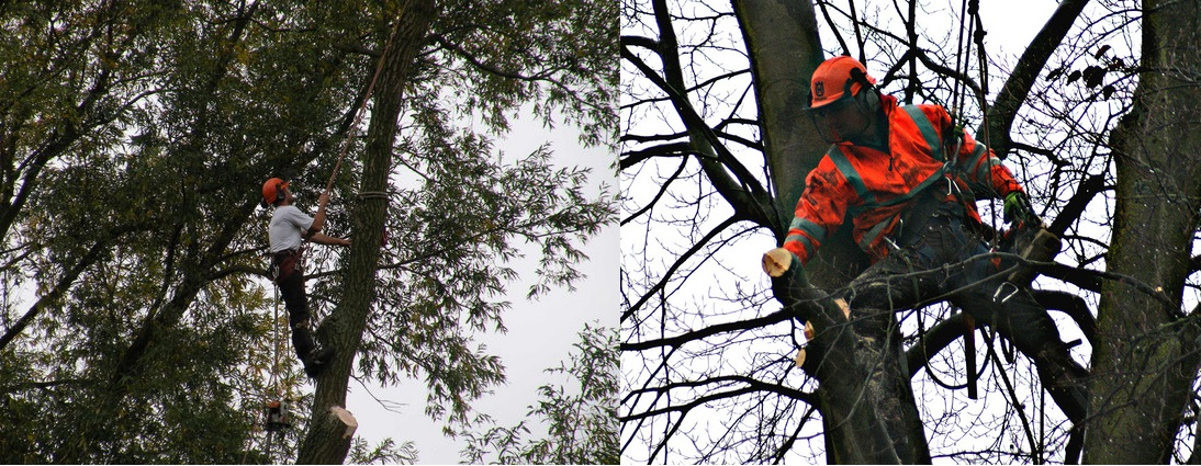 tree surgery dunvant swansea
