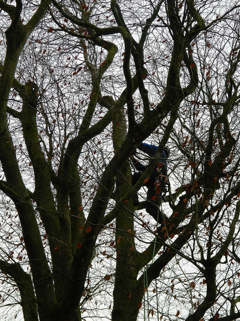 removing damaged trees swansea dunvant killay